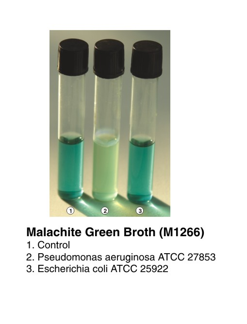 Malachite Green Broth Complies As Per Iso 17025 2005 Microbiology Dehydrated Culture Media Selective Animal Based Media Bacterial